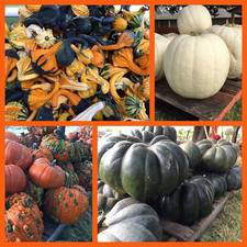 Pumpkin Fest 2016 - start Oct 23 2016 1200PM