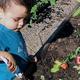 Mower's son often works in the garden with his mom. (Keila Mower/South Jordan Resident)