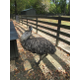 An emu is one of the exotic animals living at Greenmore.
