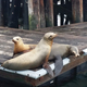 Sea lions sunning in Morro Bay