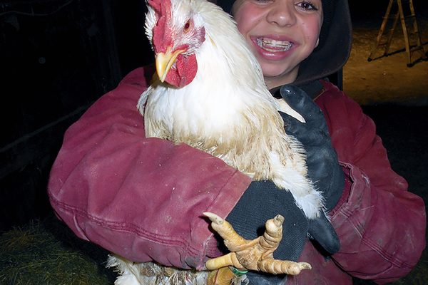 Kimberly McClellan holds a chicken she raised. McClellan raised two groups of chickens at her home in Riverton to test the impact of organic and conventional feed on chicken meat. (Jessie Hadfield)