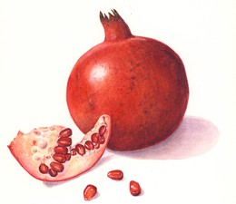 Medium 1736a0e pomegranate