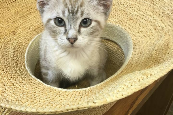 "Karen's cat, Alex: ""Adoption Day - Alex sat in my hat while we filled out all the paperwork - they take adoption VERY seriously."""