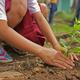 Planting trees for volunteer work. (Pixabay)