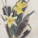 Thumb daffodils 20with 20text