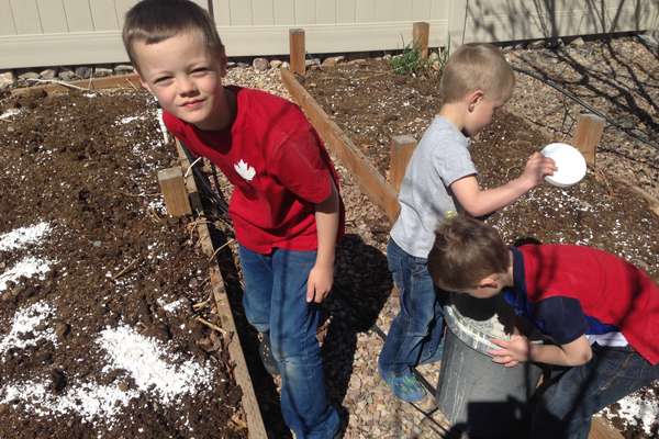Eric, Enoch and Elijah Oler scatter smashed eggshells onto their garden beds. (Natalie Conforto/City Journals)