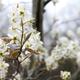 photo credit Kevin Fernando of Pittsburgh Botanic Garden