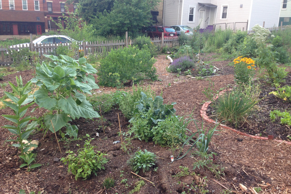Food City Community Garden