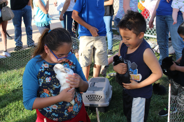 People could play with bunnies as part of a petting zoo at the Cinco de Mayo celebration put on by the Latinos in Action club. (Travis Barton/City Journals)