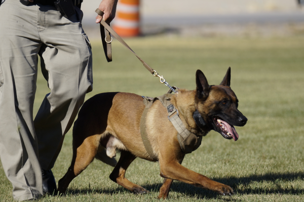 Law enforcement K-9s will be on hand at the UDPS safety fair on June 15. (Utah Department of Public Safety)
