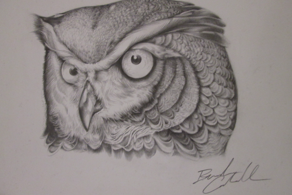 A pencil owl drawing by Brandon Cahill.