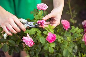 Medium gardening