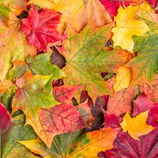 Medium mb autumncolors
