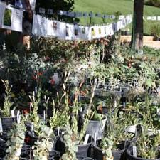 Medium fall plant sale