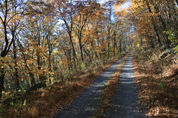Armstrong Road in the Fall