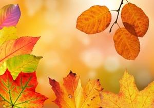 Medium autumn mid