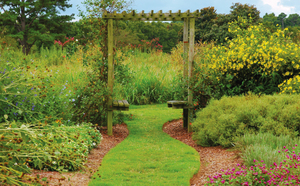 Medium garden1