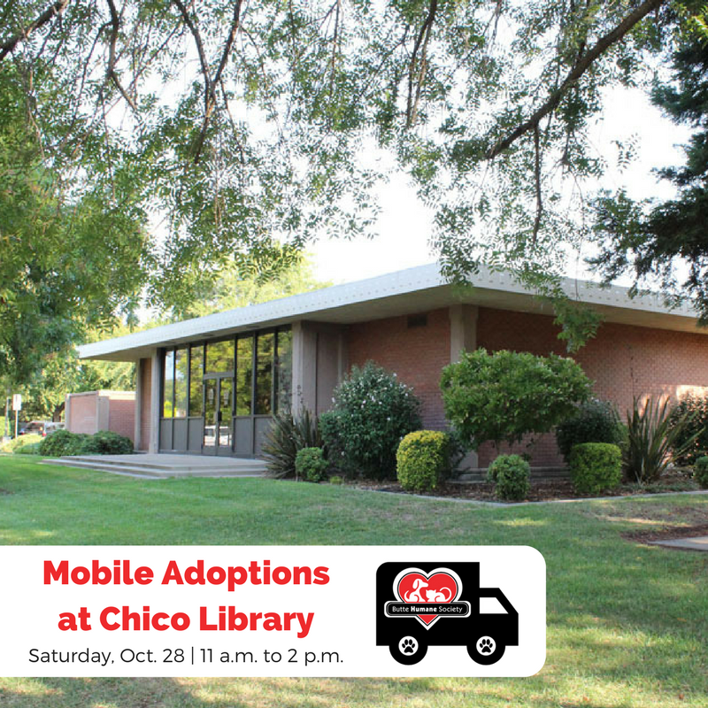 Mobile adoptions chico library