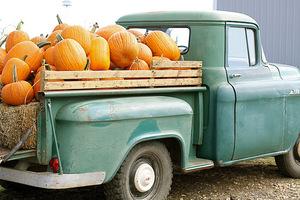 Medium pumpkinstruck