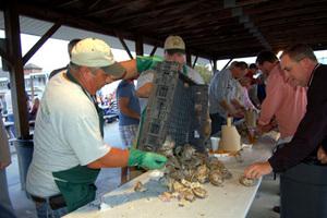 Medium oysters