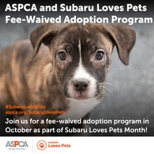 Medium subaru loves pets shareable 2017