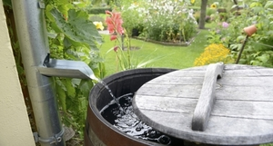 Medium rainbarrel