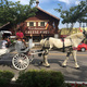 A horse and buggy is typical transportation around town. Photo by Dayna Harpster.