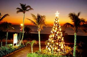 Captiva Christmas Tree Lighting 2017 - start Nov 24 2017 0530PM