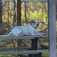 Petey enjoying the day outside. Photo couresty of Tabatha Knox of Vibrant Images.