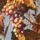 Richard Bollinger's 'Divine Fruit.'