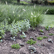 Thumb native 20plantscape