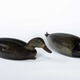 Shang Wheeler Decoys