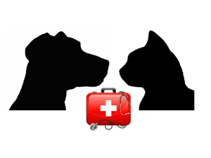 Pet CPR  Emergency Measures Class - start Apr 21 2018 1000AM