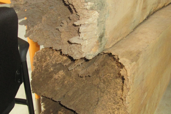 Termites had done major structural damage before the building was renovated.