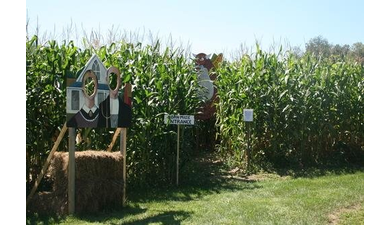 Riverview farm corn maze pumpkin patch nh 38098