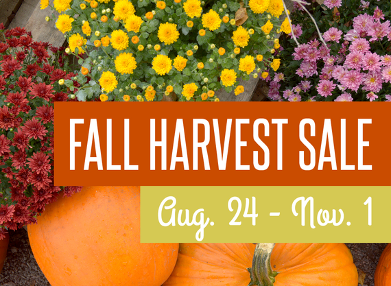 Fall 20harvest 20sale