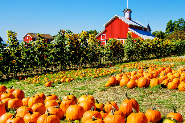 Pumpkin patch gettyimages 136368239