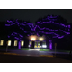 Purple Lights Initiative Returns to City of Maple Grove to Raise Awareness of Domestic Violence