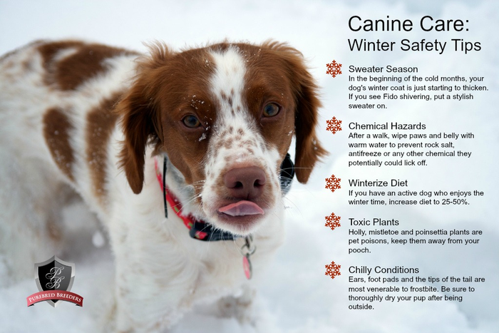 10d98696baf Cold Weather Pet Safety Tips | Boreal Emergency Preparedness Portal