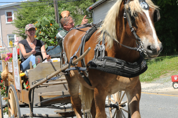 Billy the horse pulls a cart through the parade route.
