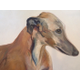 Commissioned Pet Portraits by Annie OConnell