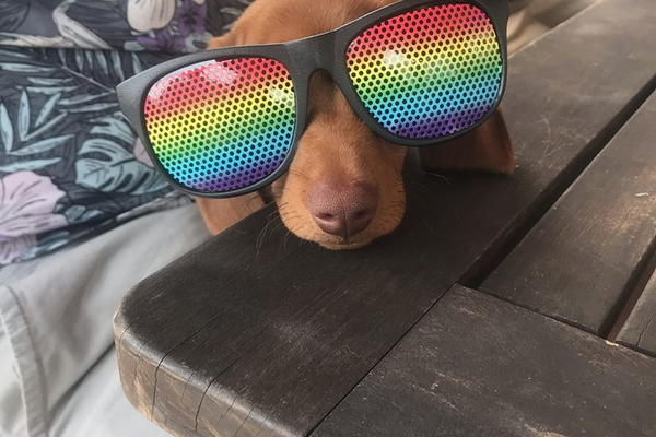 Pride dog, courtesy of Joshua Dickey