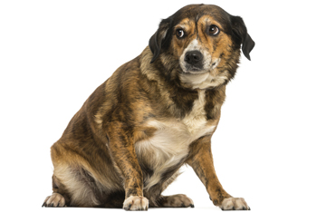 Calming Anxiety in Dogs