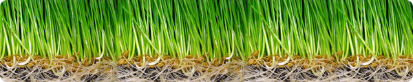 wheatgrass-info-wheatgrass-benefits