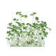 Indoor Kitchen Gardening Easy-Grow Microgreens Are Big on Nutrition