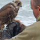 Sammy, the Falconer, kept the beaches clear of seagulls under his watch, the contract ended in Septembe