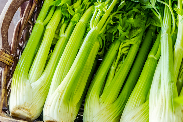 Nutritional benefits from celery