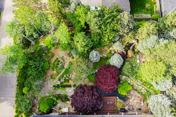 Bing Chen's home garden from above