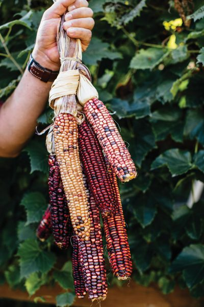 Taylor Keen holding heirloom corn