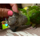 Parrot Education Adoption and Rehoming League Works to  Find Homes for Unwanted Birds